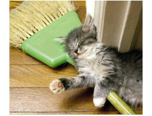 cat-with-broom.jpg