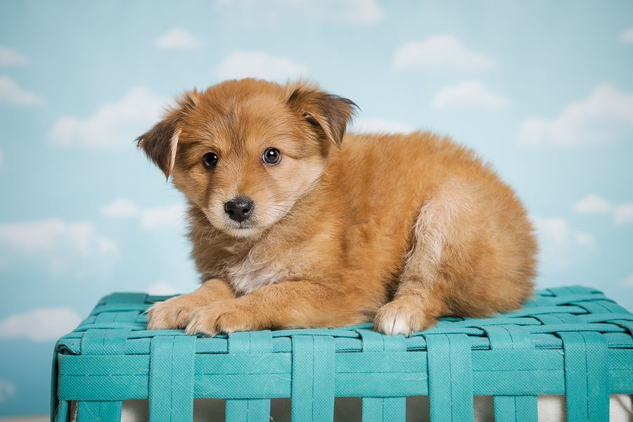 Adopt Your New Best Friend -