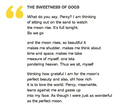 Mary Oliver_The Sweetness of Dogs.jpg