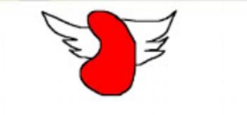 Kidney wings.jpg