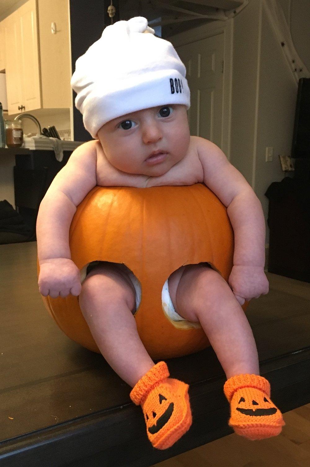 Baby Bird in a pumpkin