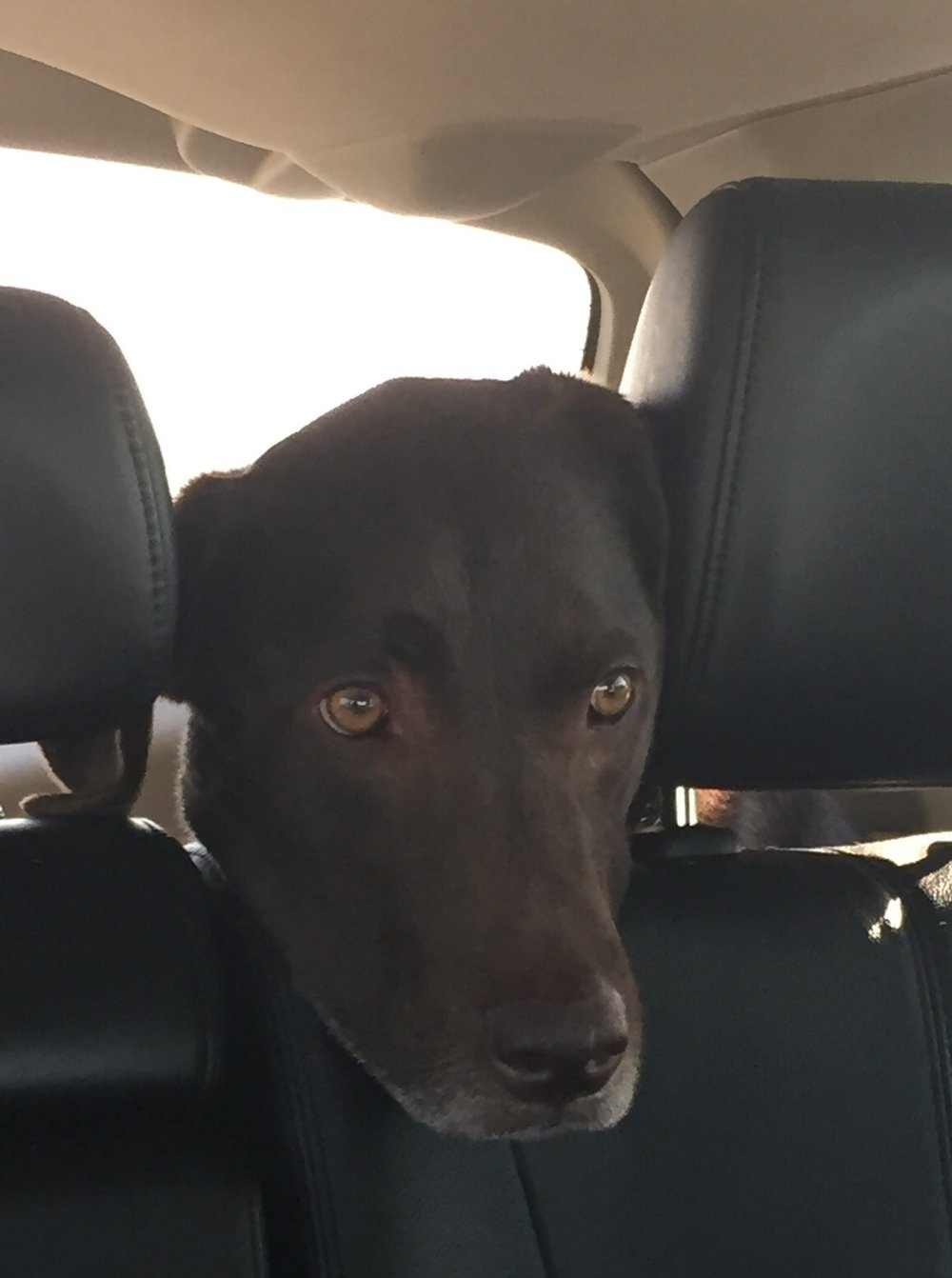 Thor in the car