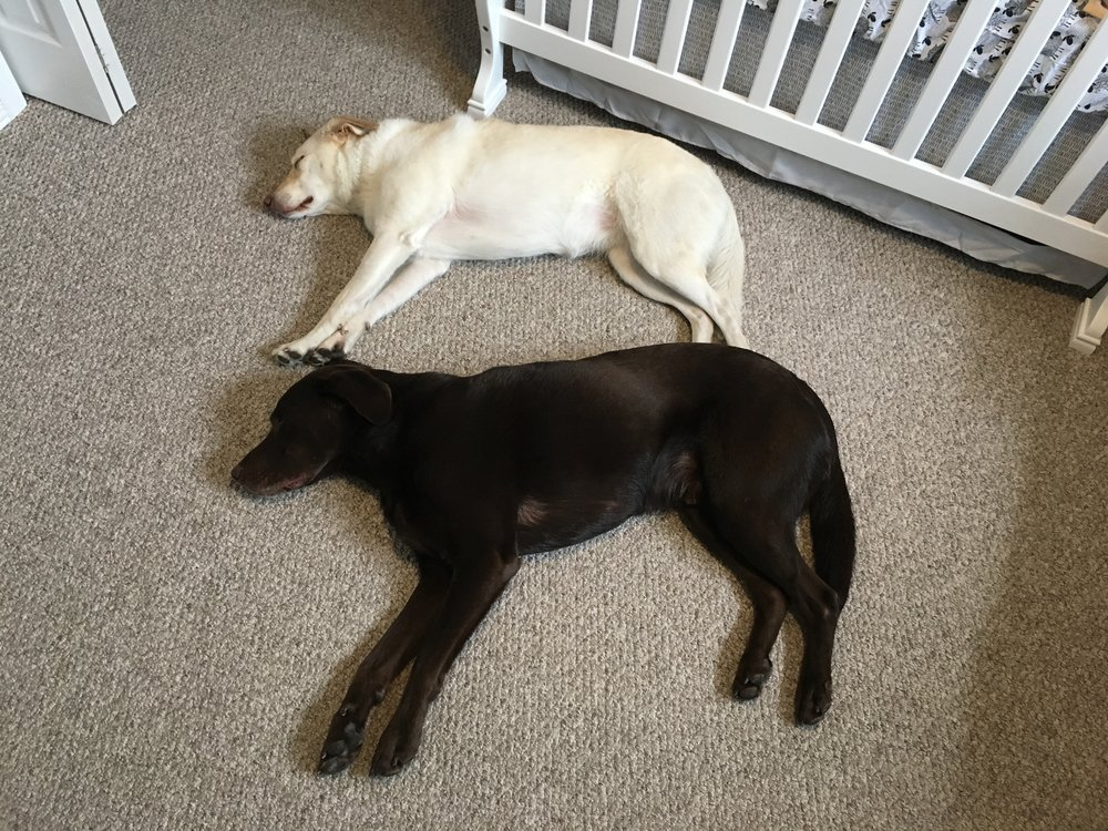 Thor and Storm sleeping in Baby Bird's room