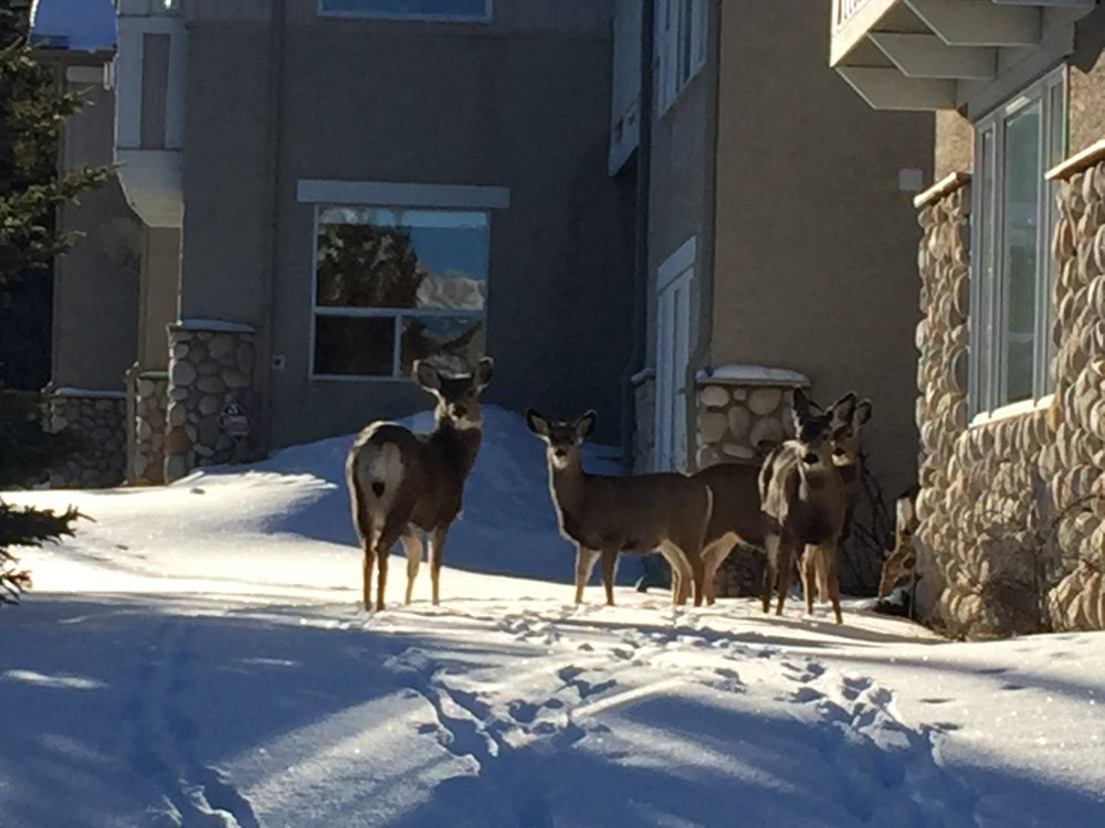 Some deer hanging out in the neighbourhood as we were leaving