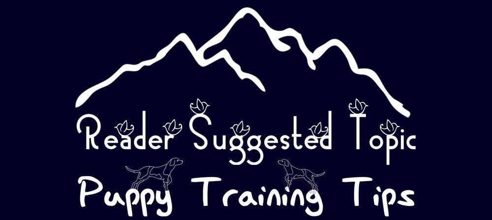 Puppy Training Tips.jpeg
