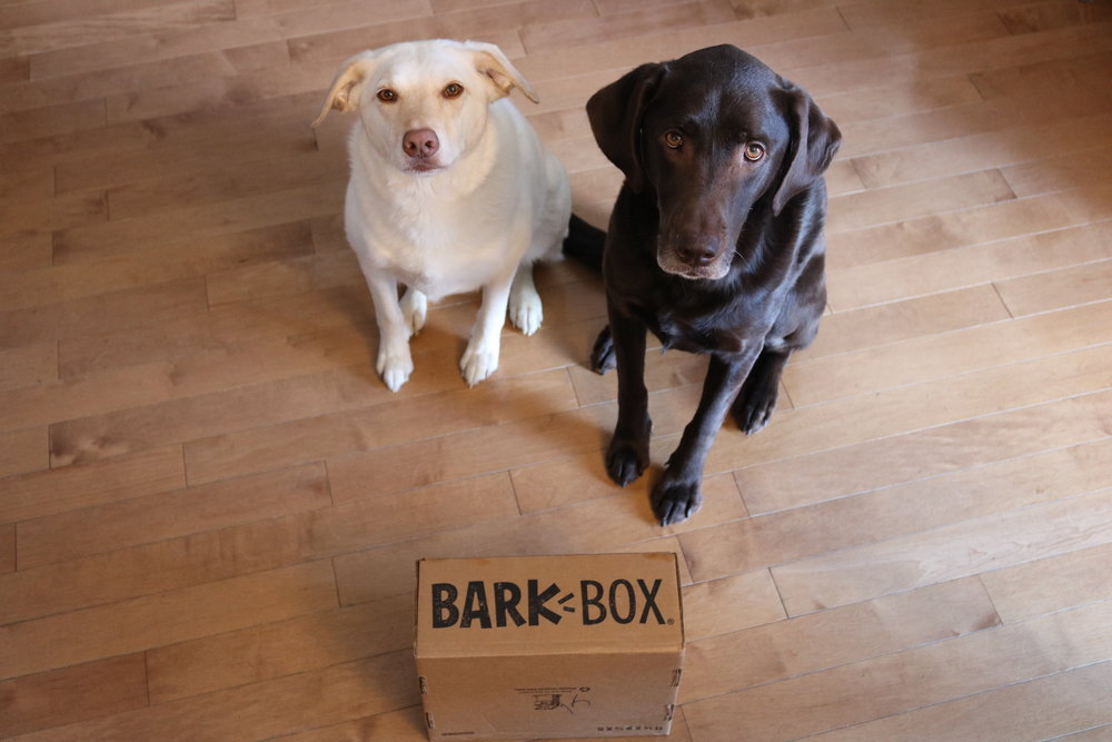 Thor and Storm waiting for the Bark Box