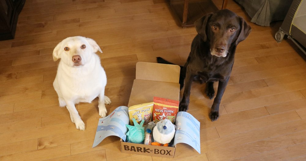 Thor and Storm with the Bark Box
