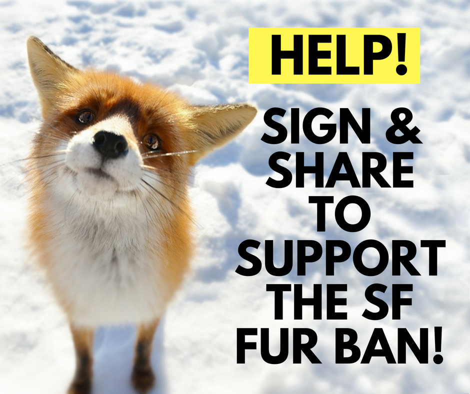 SIGN & SHARE TO SUPPORT THE SF FUR BAN! (7).png