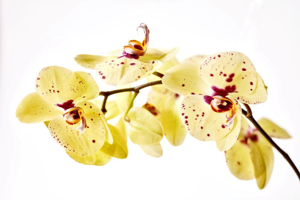 WWFlowers9590.jpg