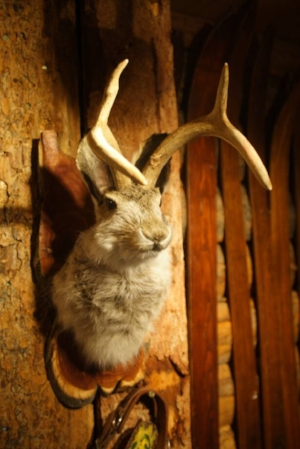 Jackalope - $120.00 + Shipping  (comes with hunting permit)