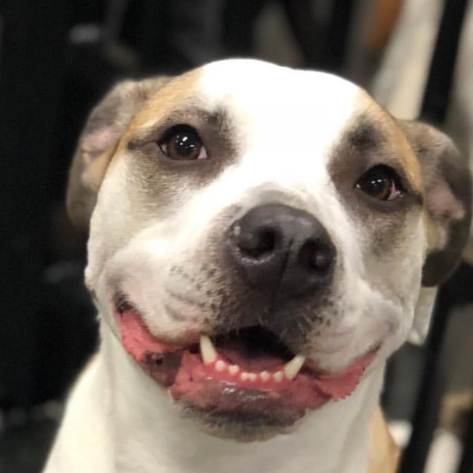 10AM - 12PMFREE PUPPY PLAYTIME - Requirements:- Puppies up to 6 months old- No evaluation needed / No appointment needed- Current on required vaccines: at least 2 DHPP & Bordetella; puppies over 4 months must have a Rabies vaccine.- If you're not a member or it's your first time joining us, please bring a copy of current vaccination records. We accept digital and print proofs of your vaccination records.- Free of fleas and ticks!