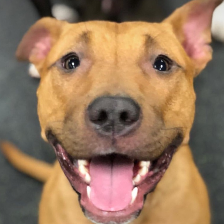 12pM - 6PM$5 sunday PLAYday - Requirements:- Dogs must be more than 3 months old- No evaluation needed / No appointment needed- NO dogs in heat allowed- Current on required vaccines: Distemper, Rabies, Bordetella. (Bring a record of updated vaccines)- If you're not a member or it's your first time joining us, please bring a copy of current vaccination records. We accept digital and print proofs of your vaccination records.- Free of any communicable disease for 30 days.- Free of fleas and ticks!