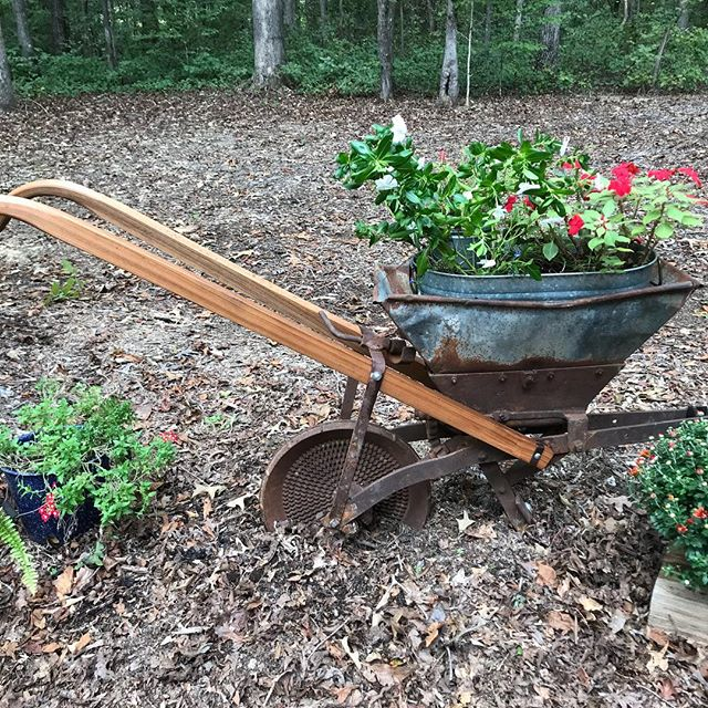 Love my new planter!  A walk be kind corn planter🐴 Works great for my flowers 🌺 #beechtreefarmweddings #barnwedding #venue#rusticwedding #antiques #chattanoogaweddingvenue #clevelandvenue #northgeorgiaweddingvenue
