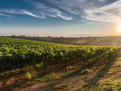 victoria-wine-tours.jpg