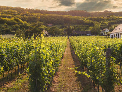 South-Australia-Wine-Tours.jpg