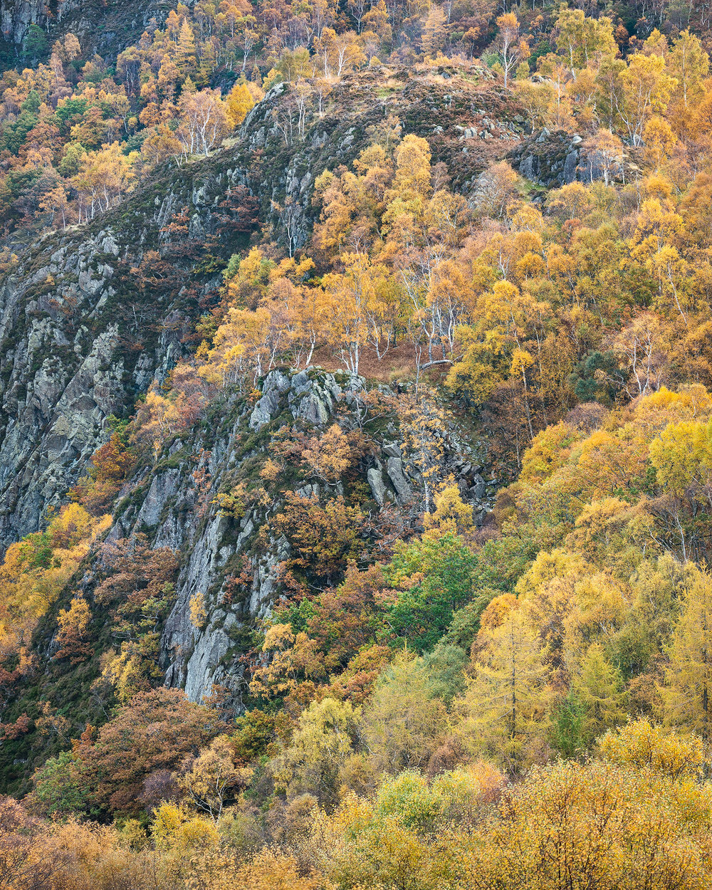 Borrowdale Autumn.jpg