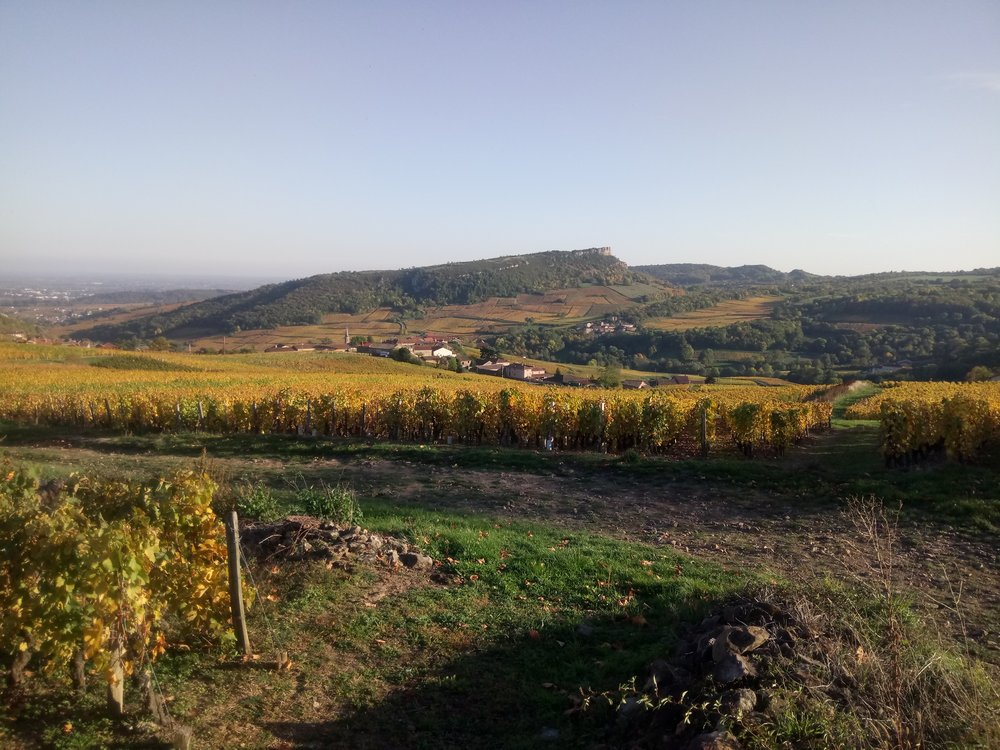 How did I end up in Vergisson Walking through a Scottish Man's Vineyard? - Read more to find out!