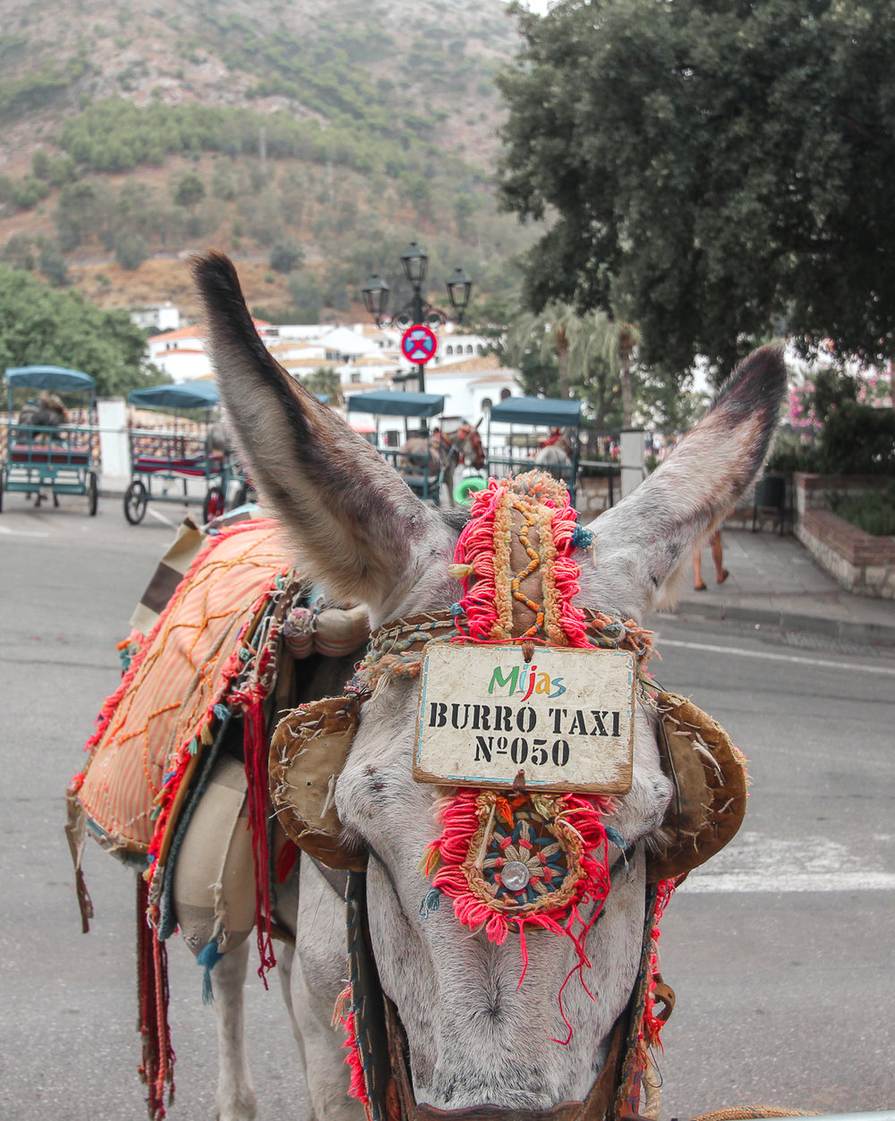 Hard work in Mijas - They are still using donkeys as a commonly used taxi service! Taking tourists all around the hills!