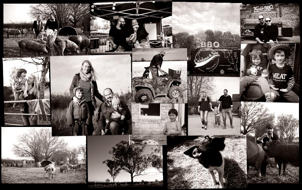 cardonana collage.png