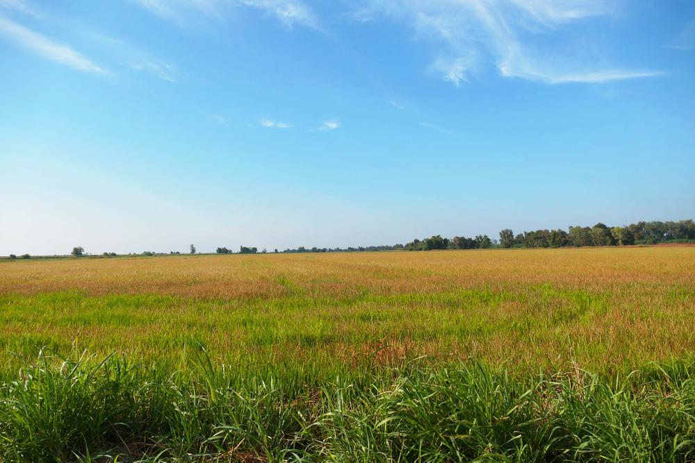 Grass_field.png