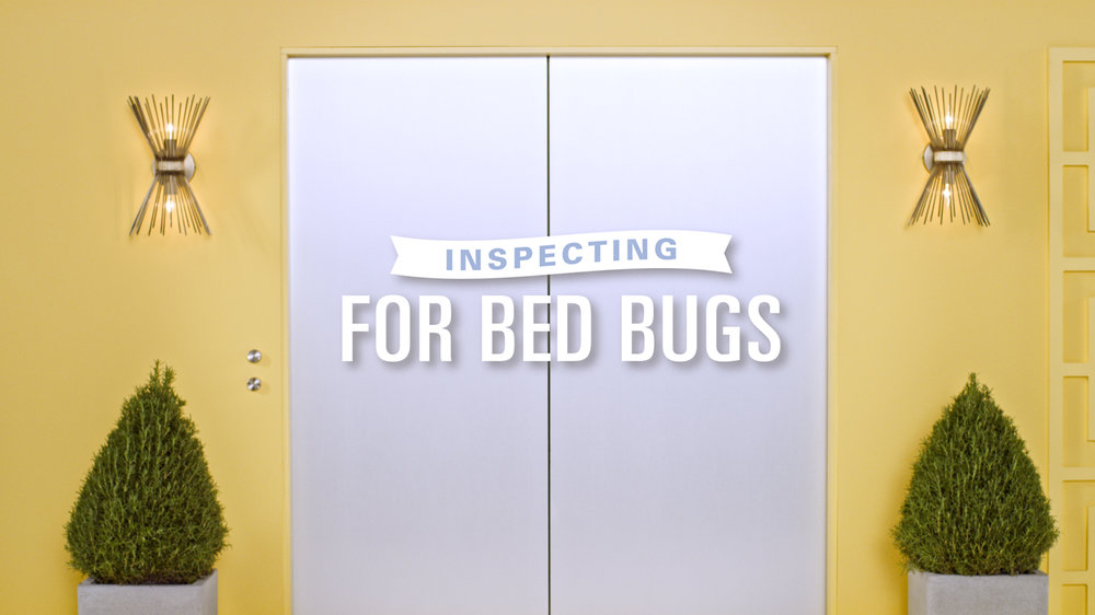 Bed_Bugs_002.jpg