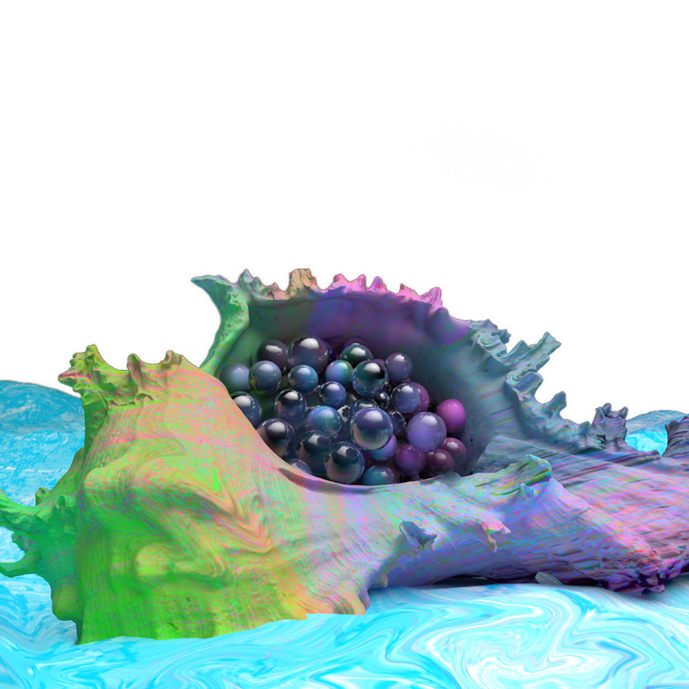 Murex_Romosus_seashell_v3.jpg