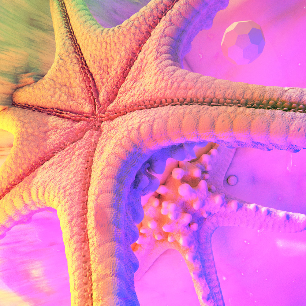 Starfish_insta.jpg