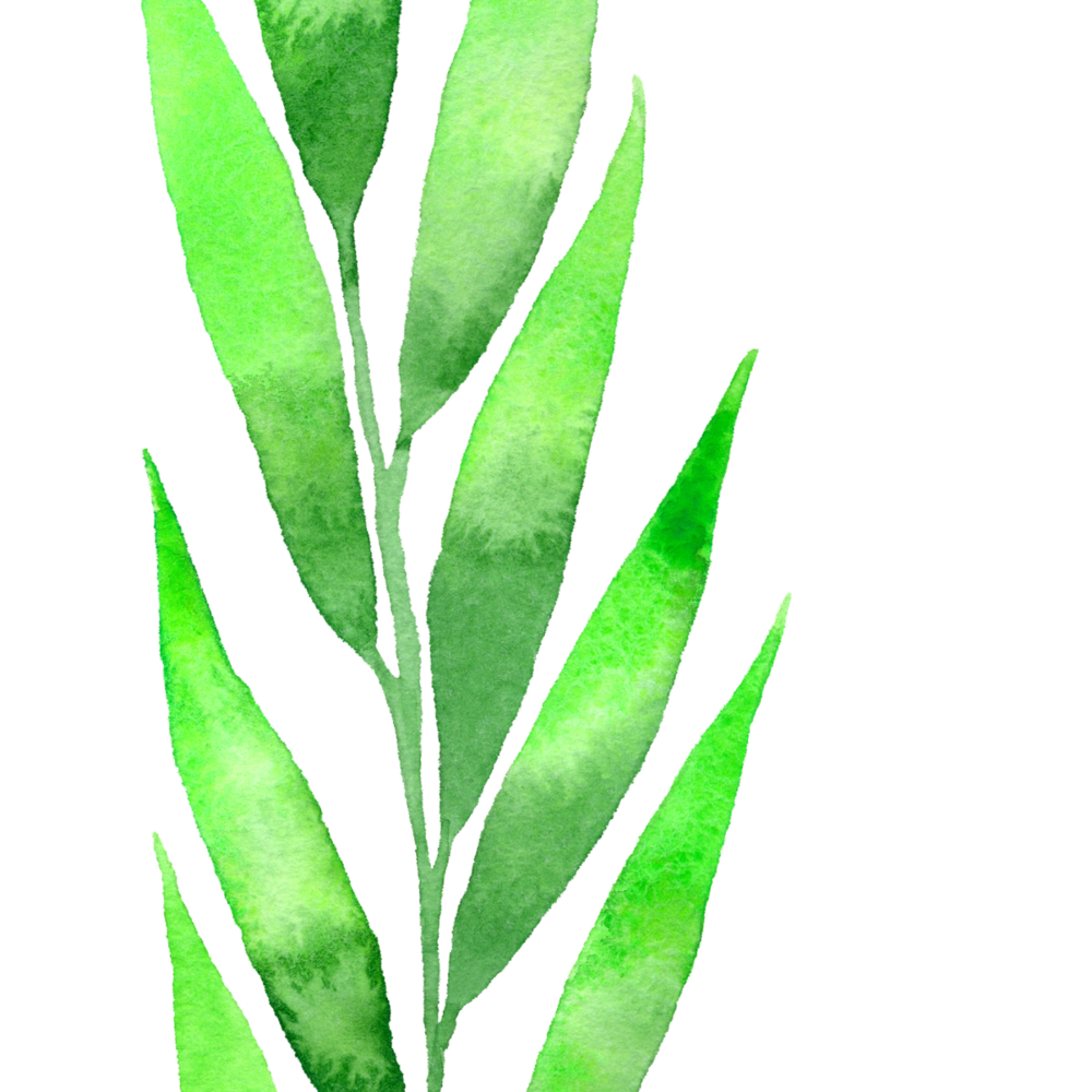 Large Leaf #3 2017-09-26.png