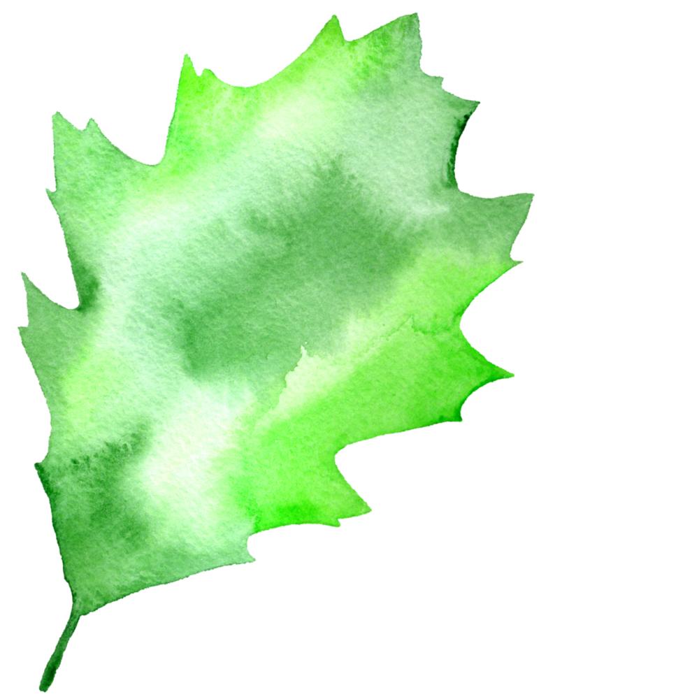 Large Leaf #4 2017-09-26.png