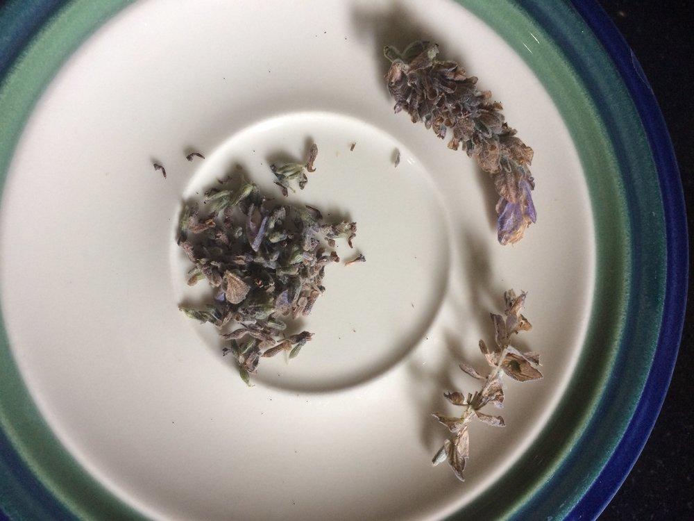 lavender separated.JPG