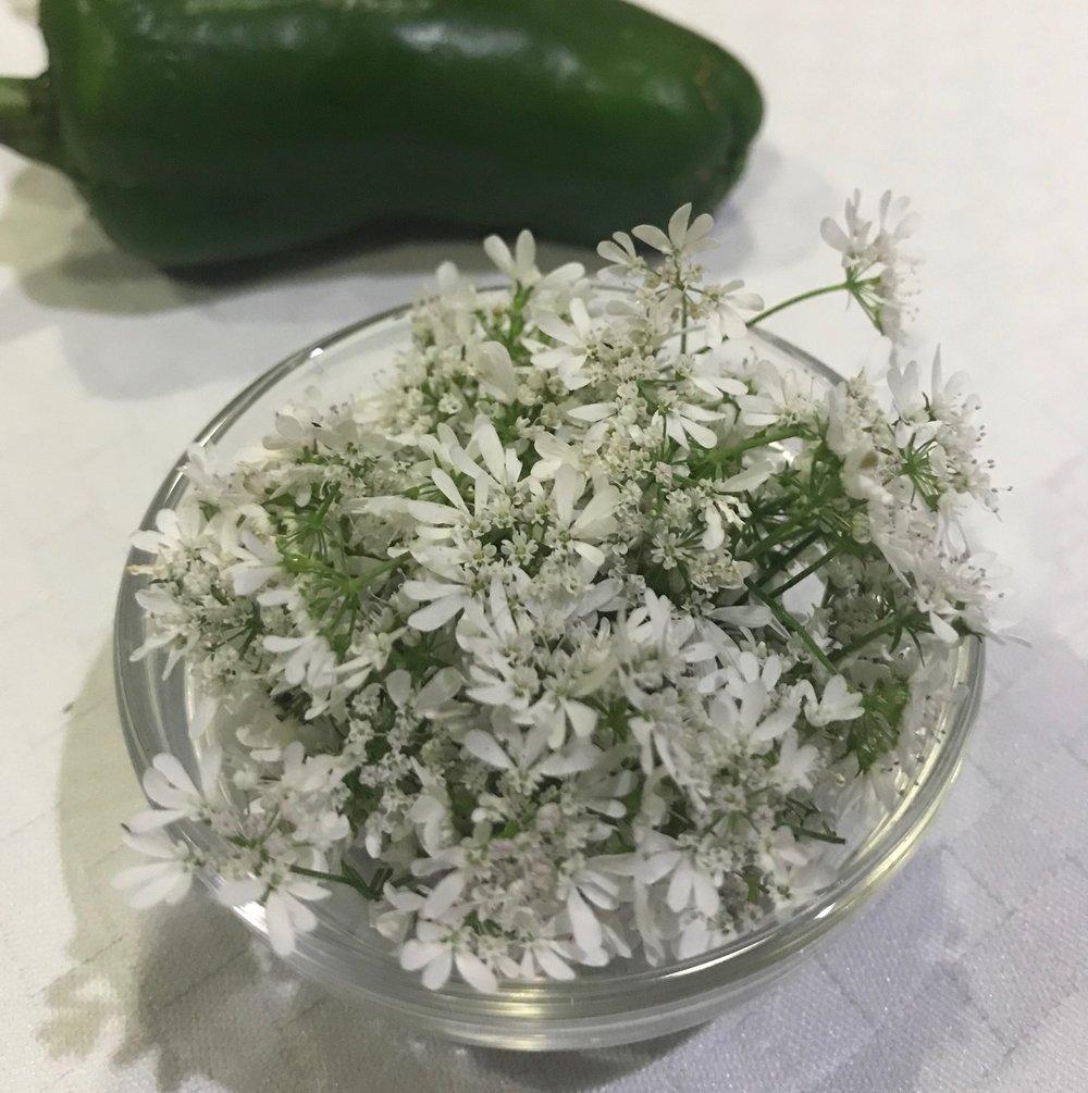 jalapeno and cilantro flowers.jpg