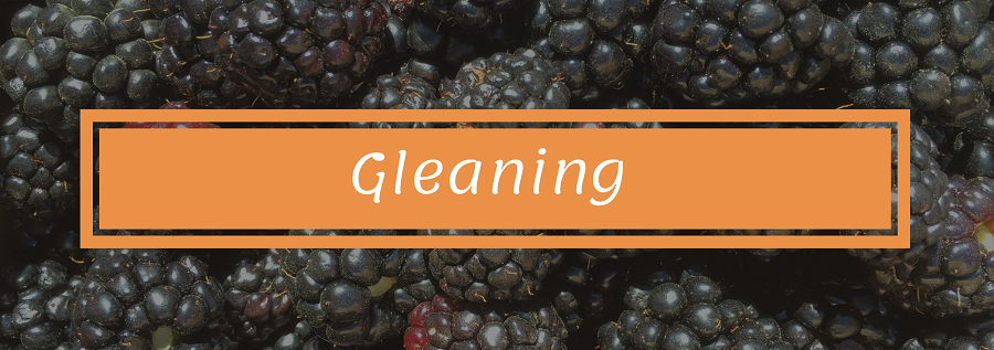 Gleaning.png