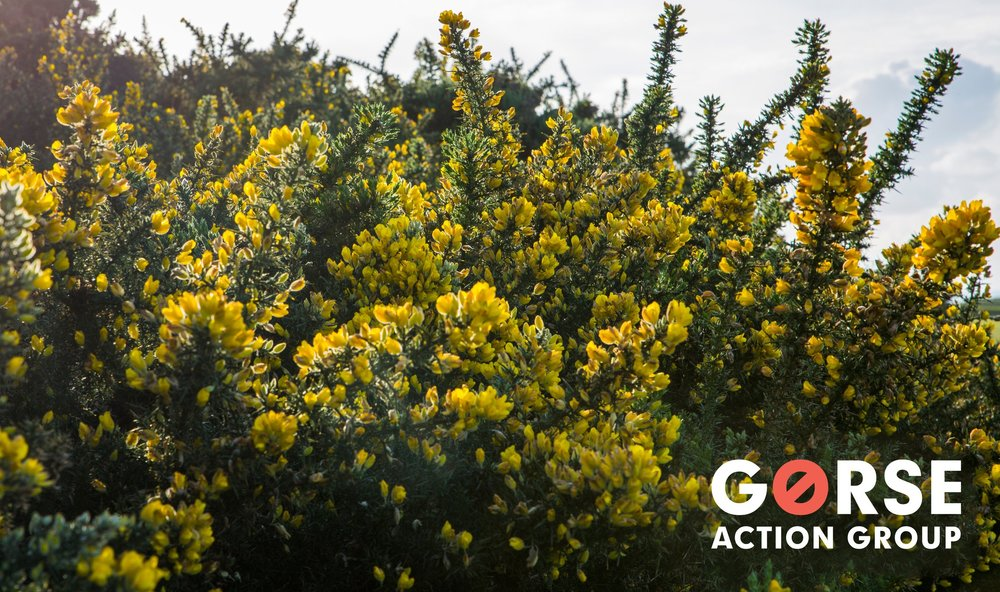 Gorse+photo+with+GAG+logo+2018.jpg
