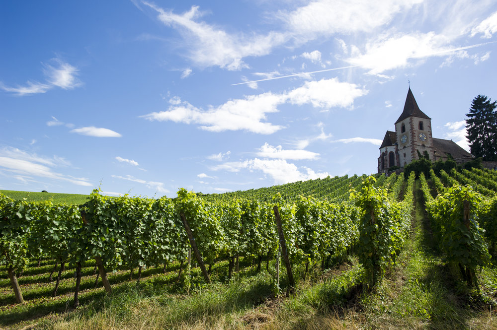 vineyards-alsace-france.jpg