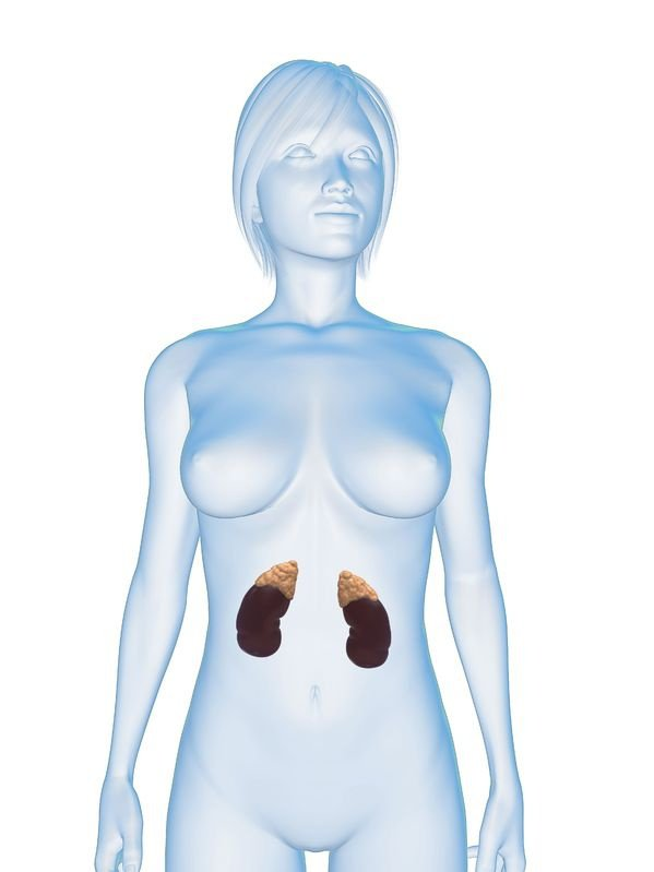 adrenal-glands-5273045_m.jpg