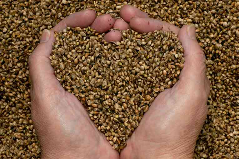 hemp-seed-oil-benefits1.jpg