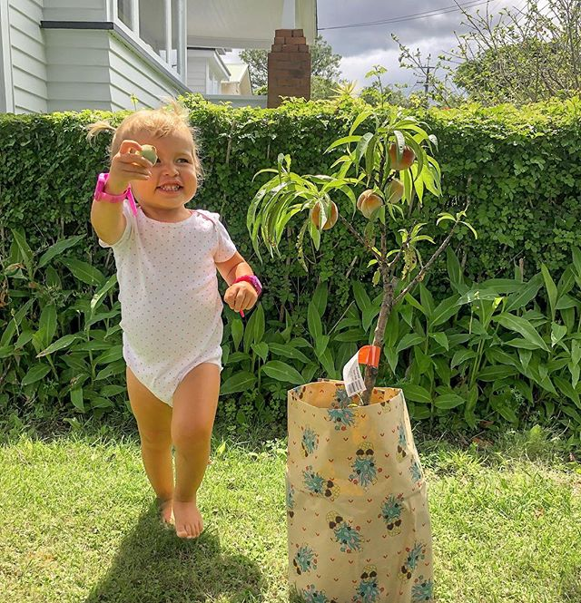 Did you know the NZ government plans to plant 1 billion trees over the next 10 years?! I think that is incredible ❤️We are getting on board by planting this peach tree today in our back yard. Peaches along with plums, nectarines and cherries are now in season so enjoy as much of these delicious fruits before the season ends. Add them to salads, dessert, on top of oats, or have as a daily snack 🍑🍒🍑🍒