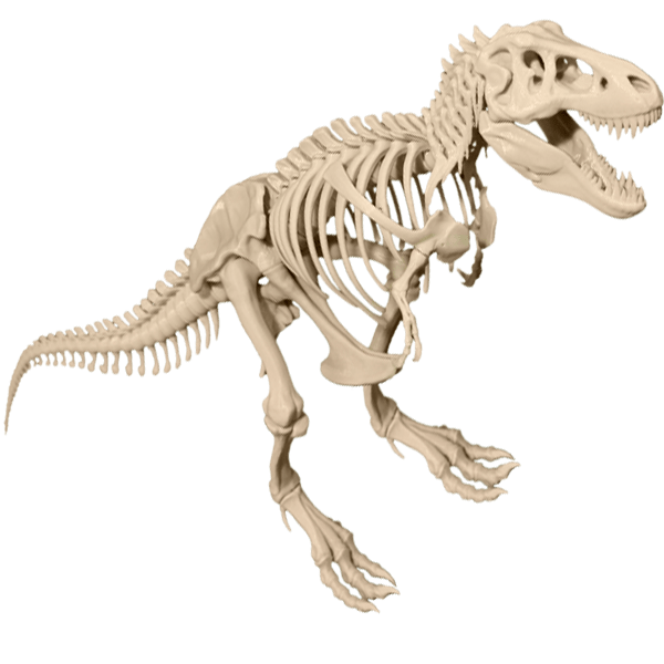 T-Rex-skeleton-dinasaur-model.png