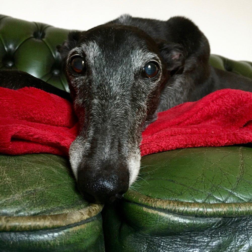 Ailish / Greyhound / Dublin, Ireland