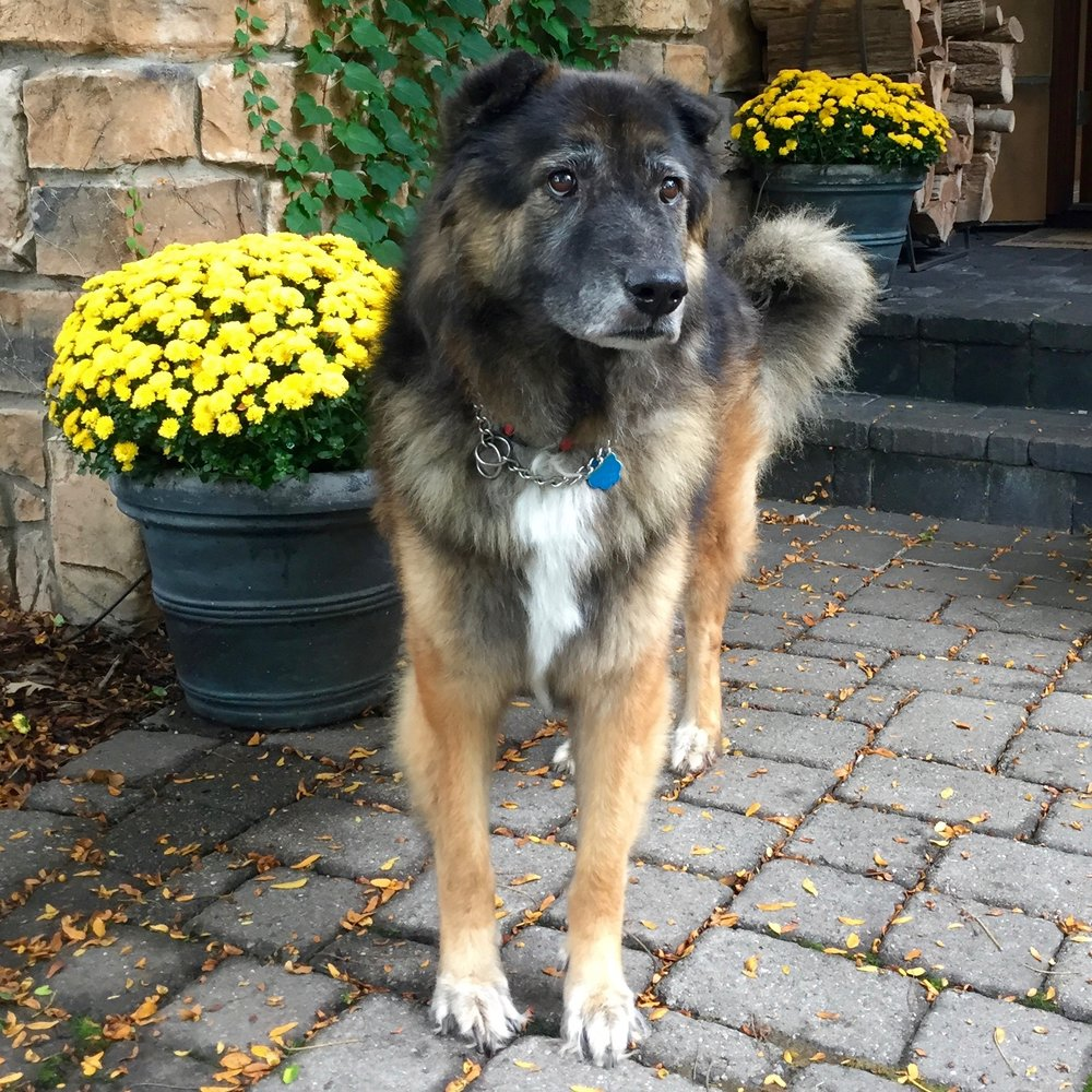 Teddie / Fuzzy and Handsome / Minneapolis, MN