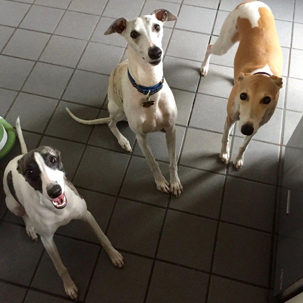 Photo of Pixie, Jack and Bam Bam