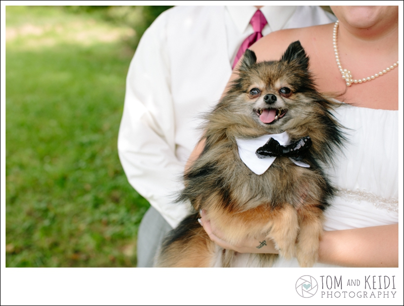 dog wedding ceremony
