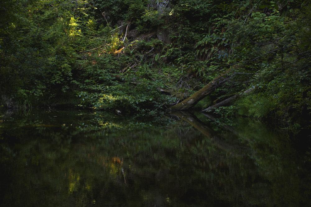 portola-redwoods_1.jpg