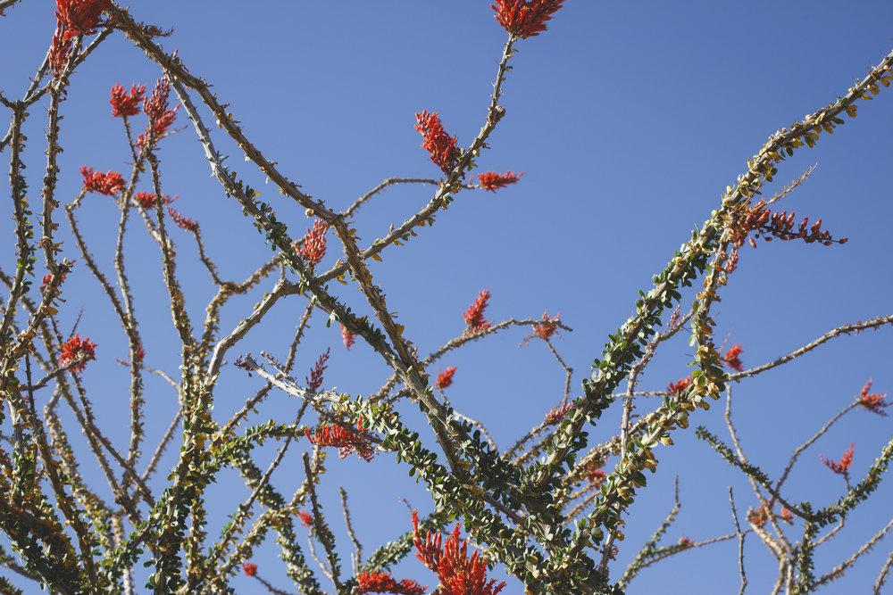 joshua-tree-superbloom_144.jpg