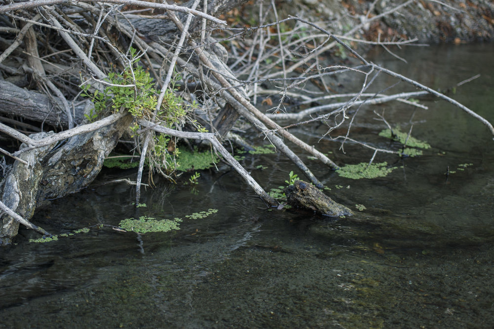 Reservoir-Sept10_3.jpg