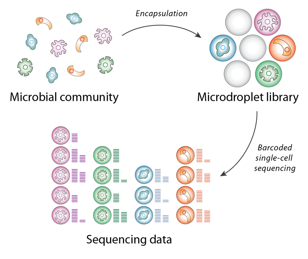 Overview of the SiC-seq workflow