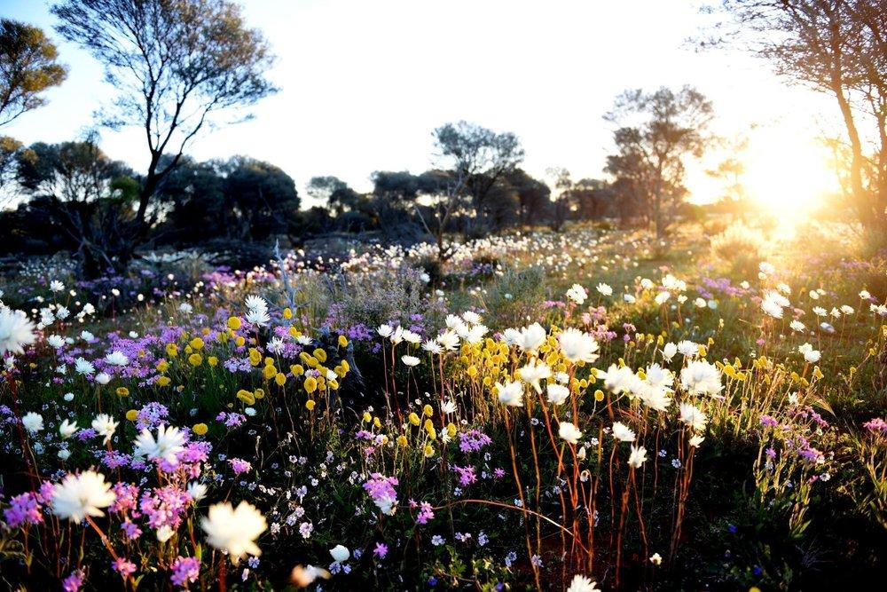 wildflowers (Custom).jpg