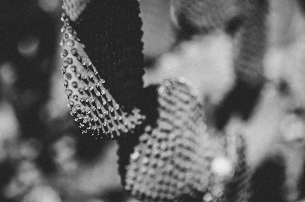 Kara_CactusEdit_33.jpg