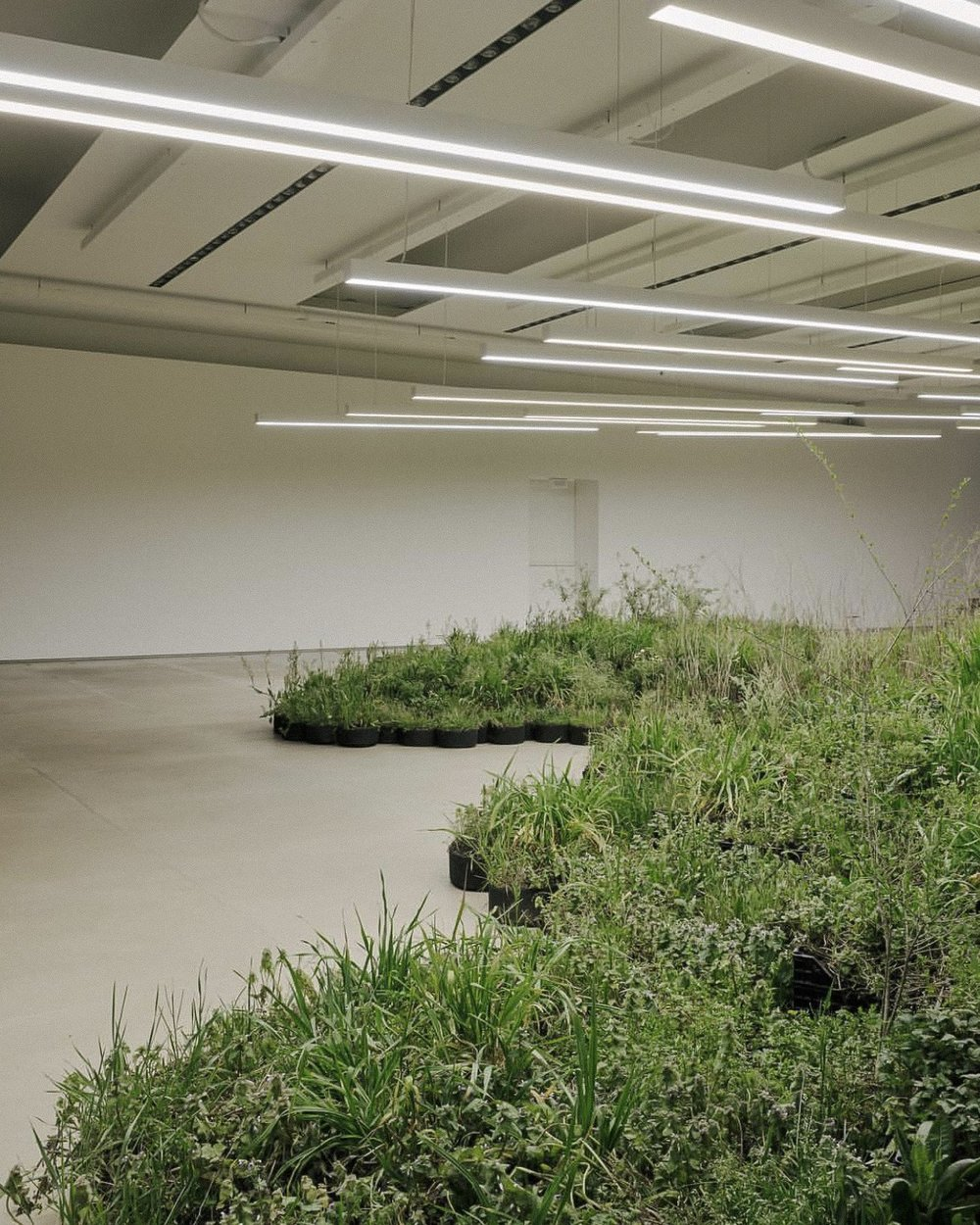 "ADJACENT FIELD, A MULTIPLE INSTALLATION BY ARTIST LINDA TEGG |  ""A large living installation of spontaneous plants picked from abandoned sites in the area of Milan – this is the stem of what artist Linda Tegg has conceived with Lucie and Luke Meier for the spaces of Jil Sander's headquarters, on the occasion of Milan Design Week 2019 and to introduce the first in a new series of Jil Sander+ collections. Durable products, for both women and men, made for life outside of the city: time spent in the mountains, by the sea, in the countryside."" 