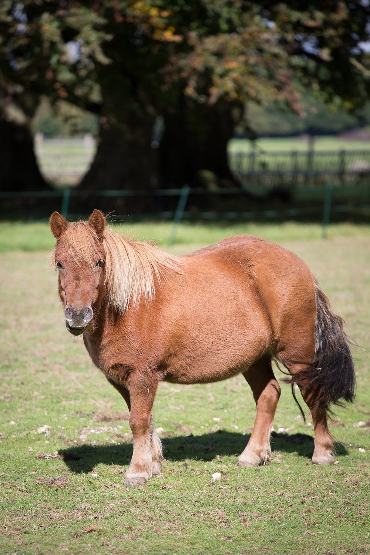 Holywell_Park_Nursing_Home_Sevenoaks_Horses_002_0504.jpg